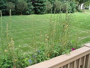 A garden with a lawn