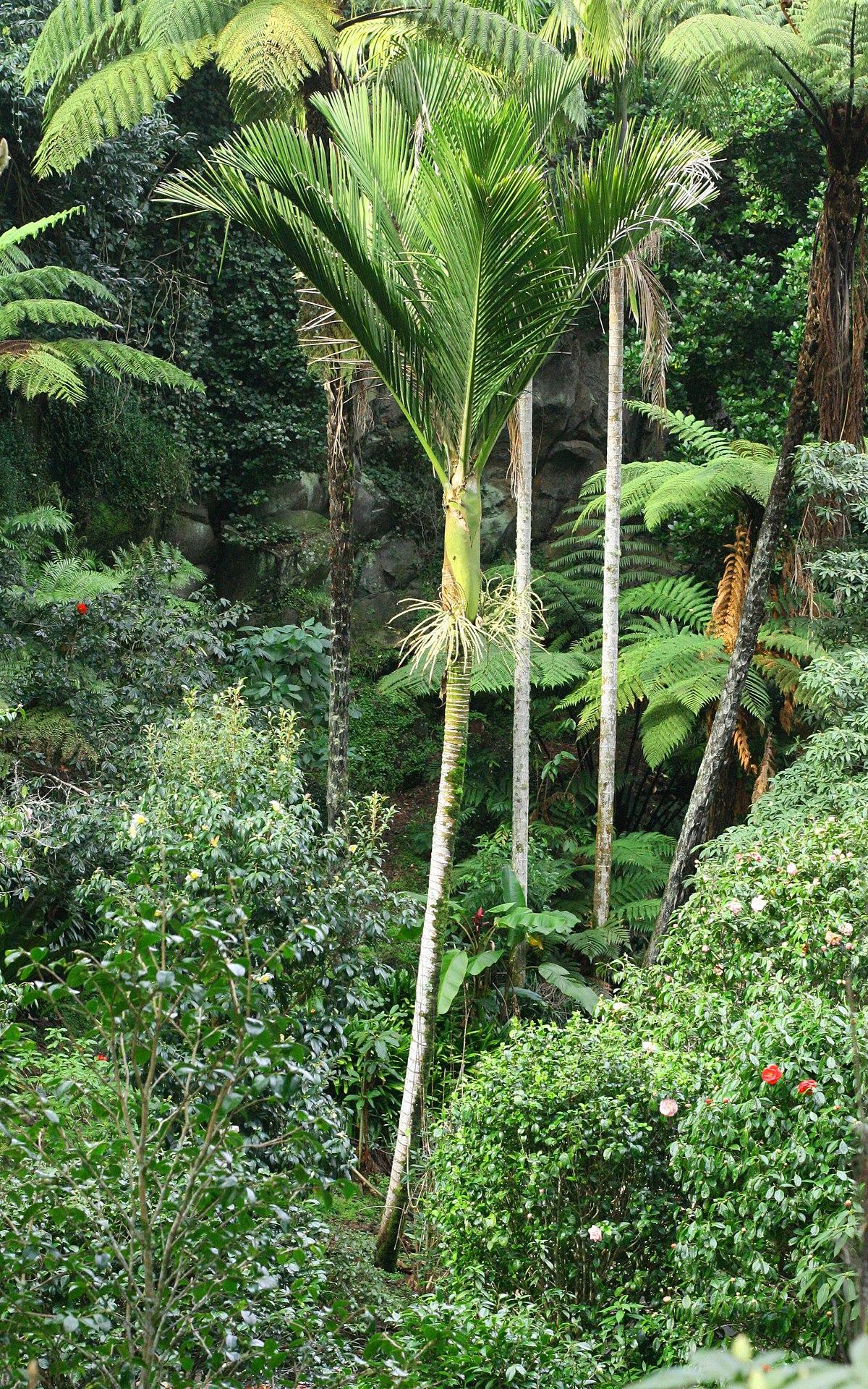 Paraparaumu New Zealand