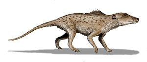 Pakicetus inachus, a whale ancestor from the E...