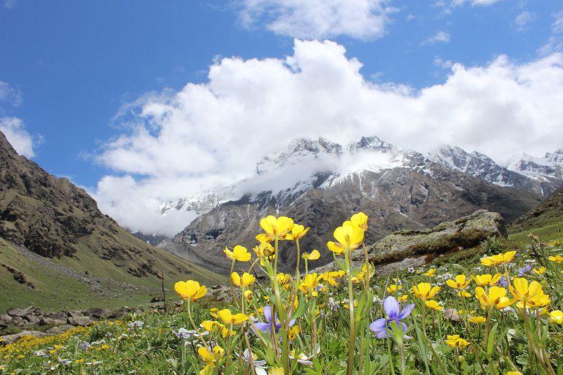 File:Atta Valley Flowers.jpg