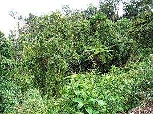 bamboo and ferns in peruvian rainforest