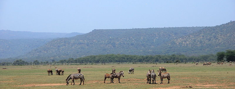 Datei:Lake manyara 2012 authorBevanda Wegmann2.JPG