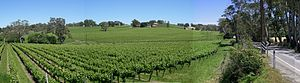 Vineyard outside the town of Lobethal in the A...