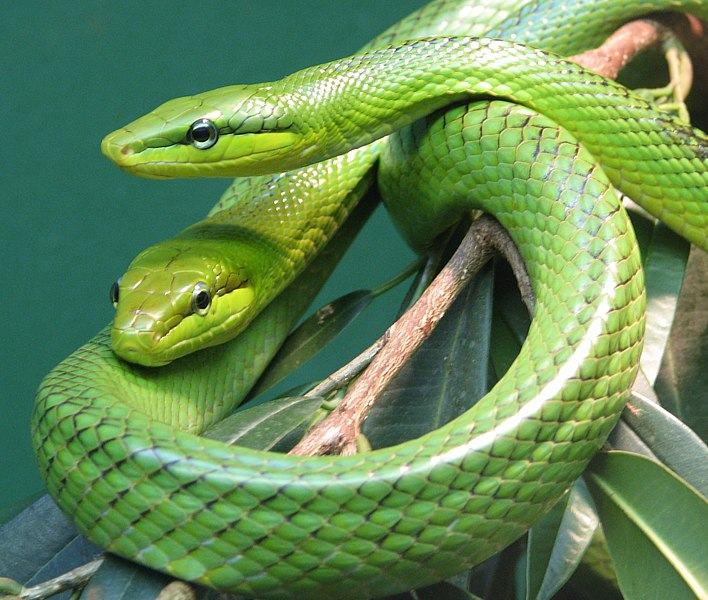 Beautiful Places In Malaysia With Description: The World's Most Colorful Snakes And Their Distinct
