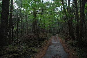 Français : La Aokigahara Jukai (mer des arbres...