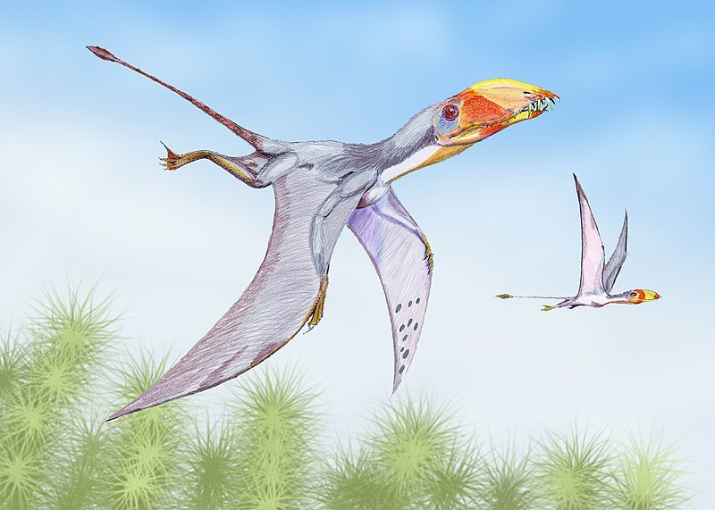File:Dimorphodon2DB.jpg