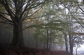 Massís del Montseny, per Víctor