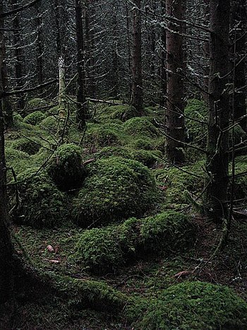 English: A dark forest Moss covered boulders i...