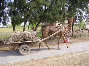 English: Camel cart used in the village of Pak...