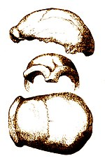 Ragam Gerak Tari Tor Tor : ragam, gerak, Jerman, Wikipedia, Bahasa, Indonesia,, Ensiklopedia, Bebas