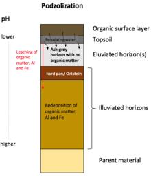 soil profile diagram of michigan sony cdx gt110 wiring podzol wikipedia key steps podzolization edit