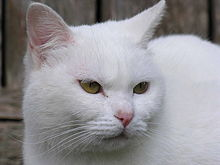 Human Interaction With Cats Wikipedia The Free Encyclopedia