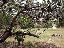 Heron Island (Queensland) - Wikipedia