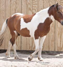 diagram of horse color [ 1200 x 1014 Pixel ]