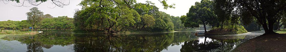 Pond Animals And Plants