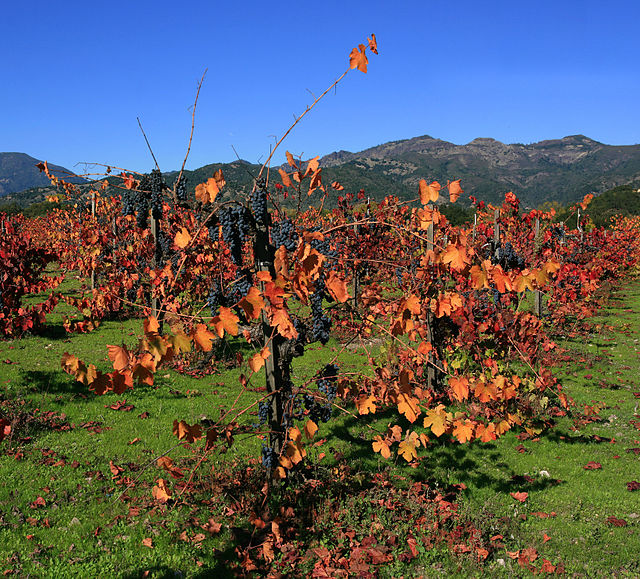 https://i0.wp.com/upload.wikimedia.org/wikipedia/commons/thumb/3/38/Vineyard_in_Napa_Valley_4_edit1.jpg/640px-Vineyard_in_Napa_Valley_4_edit1.jpg