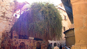 Burning Bush, St Catherine's Monastery