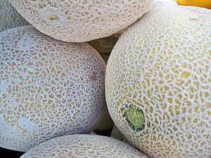 English: A cantaloupe at a market.