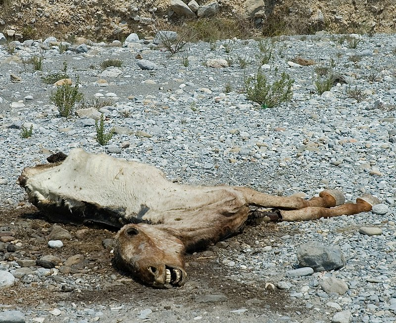 """Dead Horse in Riverbed"" by Ianaré Sévi"