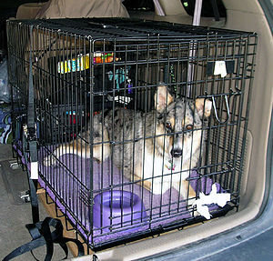 English: dog in a wire crate strapped into a c...