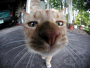 This is a home made photo of a cute cat.