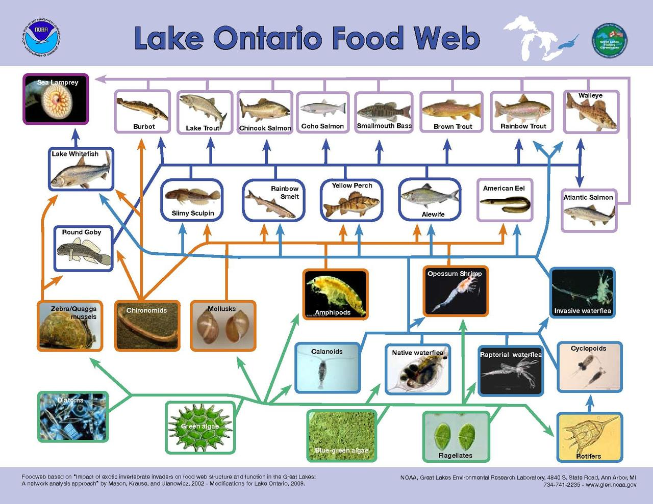 freshwater biomes food chain diagram wire for honeywell thermostat file lake ontario web pdf wikimedia commons
