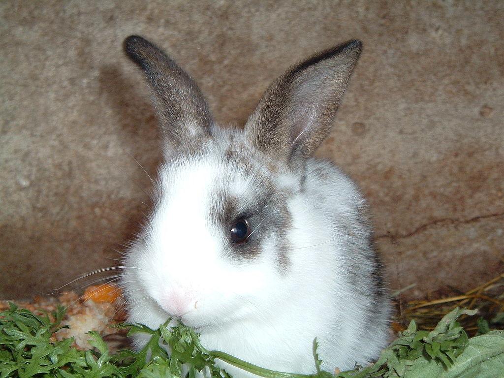 兔子是吃大便長大的是真的嗎? | 問答 | 問答 | 果殼 科技有意思