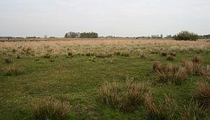 English: Field in nature area Het Twiske in No...