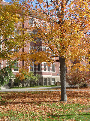Autumn leaves shower a lawn in front of UMaine...