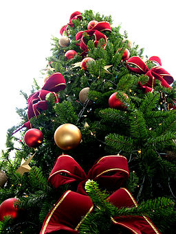 Christmas tree sxc hu