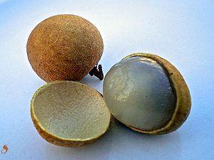 Fruta LONGAN (Dimocarpus longan)