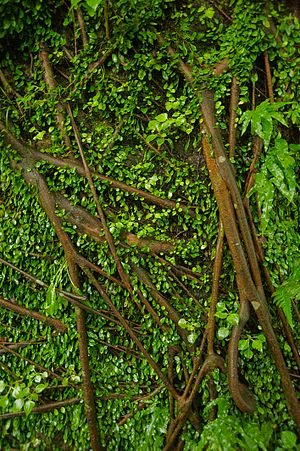 Retaining wall covered by vines