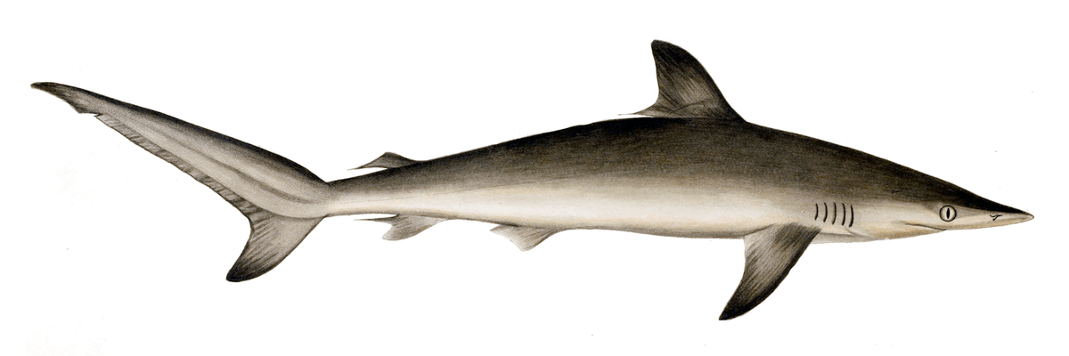 External Anatomy Of A Fish