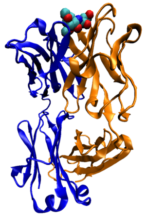 Illustration of a murine anti-cholera antibody...