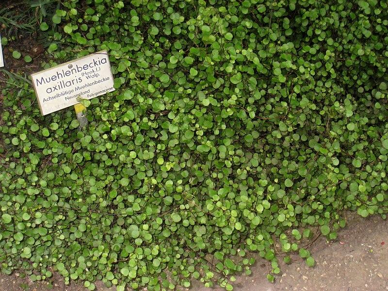 Above Ground Garden Depth