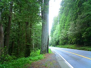 English: Redwood Sequoia sempervirens forest i...