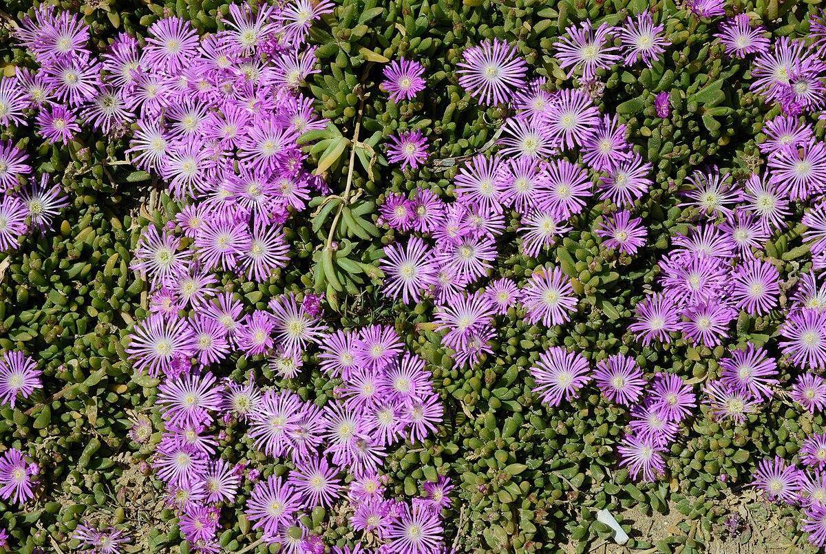 Small Flower Garden Ideas