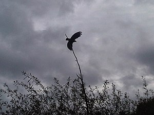 English: Bird flying from the branch. In the b...
