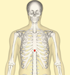 diagram of head and chest [ 1200 x 1200 Pixel ]