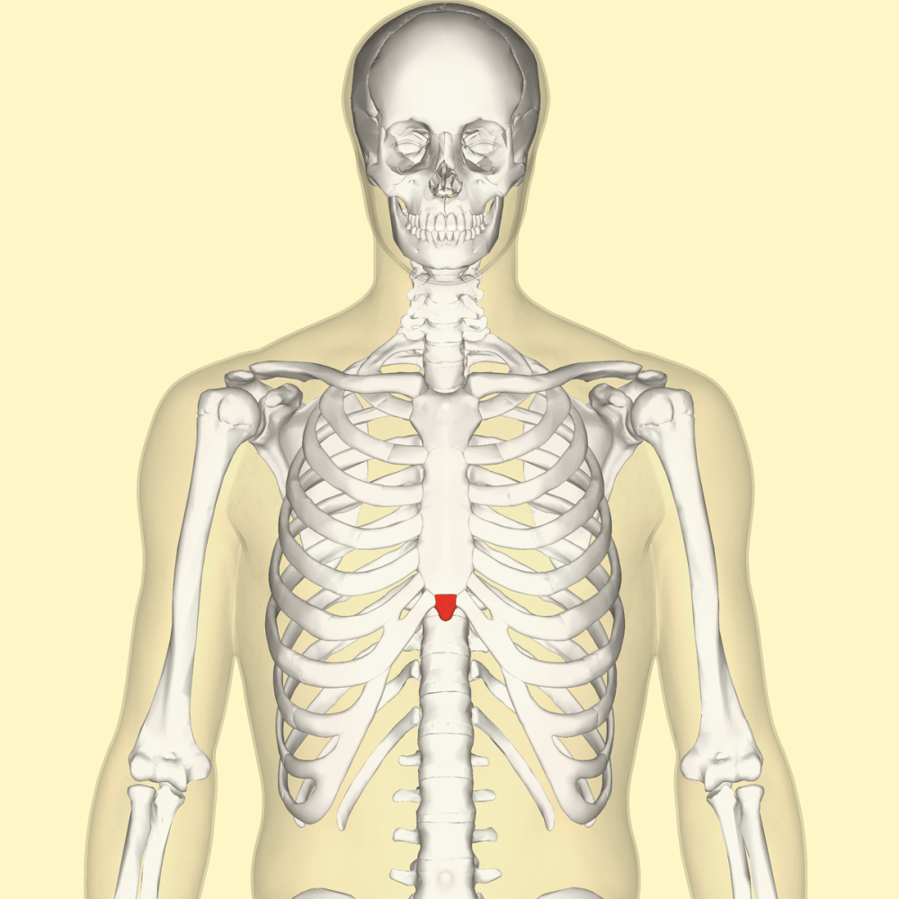 medium resolution of diagram of head and chest
