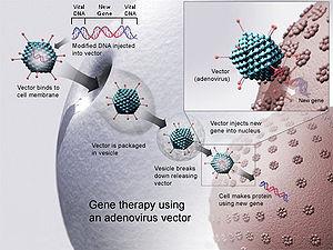 in vivo gene therapy diagram radio wiring for 1995 chevy silverado wikipedia from