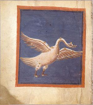 Fol. 46v Cygnus