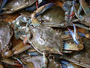 English: Blue crab on market in Piraeus - Call...
