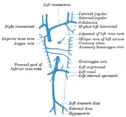 avian anatomy diagram labeled direct tv slimline 5 lnb dish subclavian vein - wikipedia