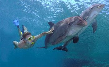 English: Free Dive into the Caribbean sea