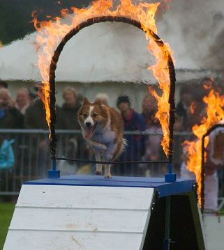 File:Hot Dog in Monmouth show.jpg