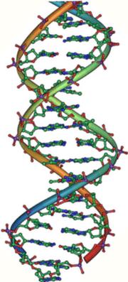 Representación esquemática de la molécula de ADN, la molécula portadora de la información genética.
