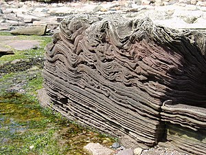 English: Rock. Folded sandstone rock near Tyni...
