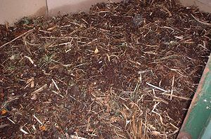 English: Freshly bedded worm bin, garden waste...