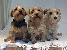 Lucas Terrier Wikipedia